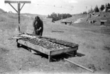 Crow Woman Drying Fruit, Tongue River Agency, Montana (1890-1910?) courtesy Library of Congress