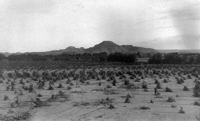 Navajo Cornfield, courtesy Western History/Genealogy Department, Denver Public Library