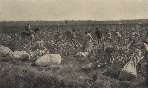 Patients Picking Cotton at Alabama Insane Hospital