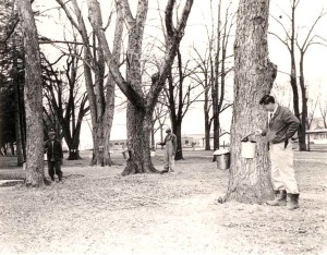 Photo of Patients Collecting Maple Syrup from Trees on the Grounds of the London Asylum for the Insane